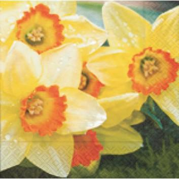 Paper + Design Servietten; 33 x 33 cm; Fresh daffodils; 21406; 3-lagig; 1/4-Falz (quadratisch); Zelltuch